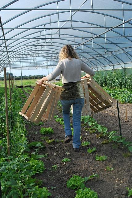 cultiver ses légumes