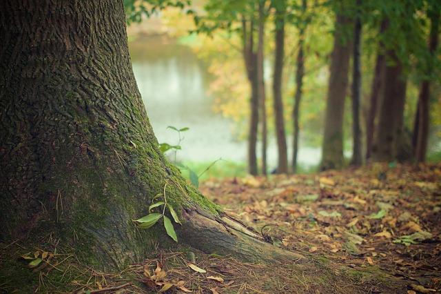 acheter une forêt avec les groupements forestiers